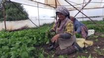 İstanbul'da Sofraları Eskişehir 'Yeşillendiriyor'