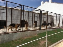 KÖPEK OTELİ - Eskişehir'de Köpek Oteli Ve Çiftliği