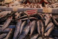 KALAMAR - Fırtınalı Havalar Balıkları Kaçırıyor