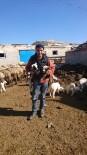 Kayakent'de Kuzular Doğmaya Başladı