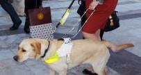SOUTHERN - Çin'de Rehber Köpeklere Uçuş İzni