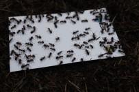 Böcek Kovucular Göreve Başladı