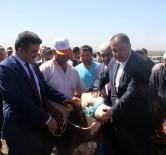 Suriye Sınırında Özel Harekat Gözetiminde Buzağı Yarışması Yapıldı