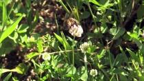 SAİT KARABULUT - Bal Arılarının Yayla Yolculuğu Başladı