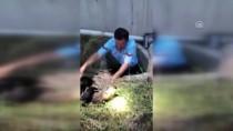 Kanalizasyona Düşen Yavru Köpekler Kurtarıldı