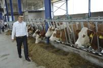 Eskişehir'e Modern Süt Tesisleri Kuruluyor