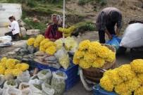 ŞIFALı BITKI - Giresun Yaylalarında Yetişen Bitkiler Yöre Halkının Geçim Kaynağı