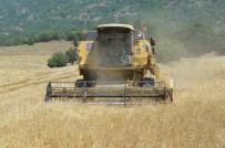 (Özel) Buğdayın Atası 'Siyez'in Hasadı Devam Ediyor