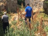 Tutak'ta Başıboş Köpekler Toplatıldı