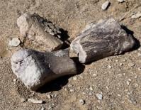 PALEONTOLOJI - 3 Yeni Dinozor Türü Bulundu