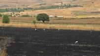 Tunceli'deki Yangında 100 Dönüm Ekili Alan Kül Oldu