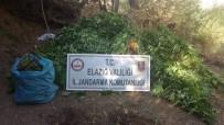 Elazığ'da 4 Bin Kök Hint Keneviri Ve 15 Kilo Esrar Ele Geçirildi