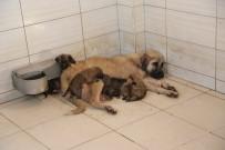 Yavru Köpeklere Önce Belediye Sonra Bir Anne Köpek Sahip Çıktı