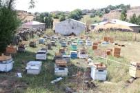 Arıları Telef Olan Ağrılı Arıcıya Genç Çiftçi Projesinden 40 Kovan Arı Desteği