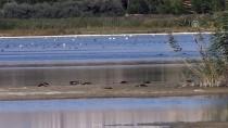 ERÇEK GÖLÜ - 'Kuş Ölümlerinin Sebebi Kirlilik Ve Mevsimsel Faktörler'
