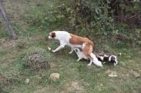 HABERCİLER - Yavru Köpeklere Belediye Sahip Çıktı