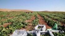 KEMAL AKTAŞ - Gübrede İndirim Ve Prim Desteği Çiftçiyi Sevindirdi