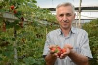 Geleceğin tarımı topraksız yapılacak