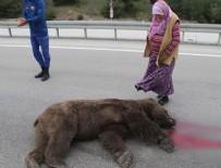 Kazada ölen ayıya 'Allah kahretsin seni; arabam mahvoldu' diye beddua etti