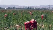 AHMET ÇOLAK - Kışlık Kuru Soğan Üreticiyi Ve Tüketiciyi Üzmeyecek
