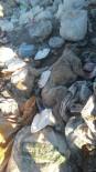 Çöplükte 30'Dan Fazla Ölü Köpek Bulundu