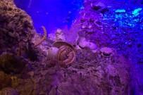KALAMAR - Antalya Deniz Biyolojisi Müzesi 25 Bin Ziyaretçiye Ağırladı