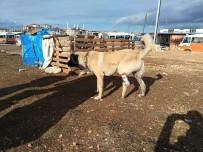ORTEZ - Ayağı Kangren Olan Köpeğe Dolmuş Şoförleri Sahip Çıktı