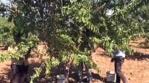 GAP Çiftçisinin Bademe İlgisi Artıyor