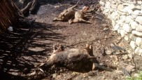 Tunceli'de 2 Ev Yandı, Çok Sayıda Hayvan Da Telef Oldu
