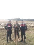 Çaldığı Koyunları Satamadan Yakalandı