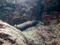 ERDAL İNÖNÜ - Deniz Dibinde Şaşırtıcı Sonuç