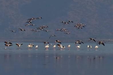 Kuş Cenneti Acıgöl'de Görsel Şölen