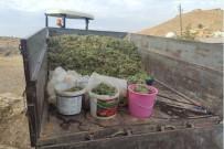Mazıdağı'nda Mezrone Üzümün Pestil Ve Cevizli Sucuk Yolculuğu Devam Ediyor