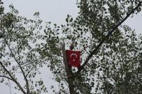 İNTIHAR - Metrelerce Uzunluktaki Ağaçlara Tarzan Gibi Tırmanıyor