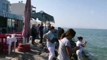CARETTA CARETTA - İzmir'de Telef Olmuş Caretta Caretta Sahile Vurdu