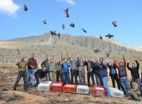 ALI HAYDAR - Elbistan'da 500 Kınalı Keklik Doğayla Buluştu