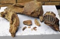 TİMSAH - Rusya'da 372 Milyon Yıllık Fosil Bulundu