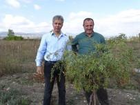 TIBET - Kiraladıkları 10 Dönüm Arazide 'Goji Berry' Meyvesi Yetiştiriciliğine Başladılar
