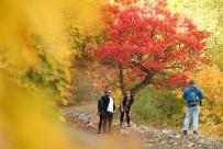 Tunceli'de Sonbaharla Gelen 'Renk Cümbüşü'