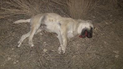 Ankara'da yine köpekleri zehirlediler!