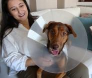 BATTAL İLGEZDI - Köpeği Ameliyat Olan Kadına Belediyeden Bir Gün Refakat İzni