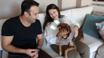 BATTAL İLGEZDI - (Özel) Köpeği Ameliyat Olan Kadına Belediyeden Bir Gün Refakat İzni