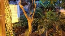 KARAYIPLER - 'Fotoğraf Stüdyosu' Gibi Kelebek Bahçesi