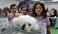 MUHABBET KUŞU - (Özel) Öğrenciler Okulu Hayvanat Bahçesine Çevirdi