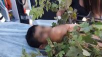 DEMİR KORKULUK - Meyve Toplarken Ağaçtan Düşen Çocuğun Koluna Demir Korkuluk Saplandı
