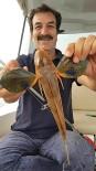 Öğretmenin Oltasına Kırlangıç Balığı Takıldı