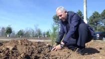 EROZYONLA MÜCADELE - Sakarya'da 87 Bin Fidan Yarın Toprakla Buluşacak