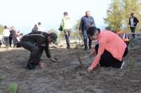 Çatalzeytin'de 200 Çam Fidanı Toprakla Buluştu