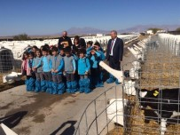 KıZıLCA - Minik Öğrenciler Besi Çiftliğinde Ders İşledi