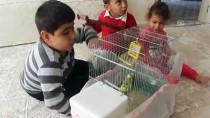 MUHABBET KUŞU - Doğuştan Felçli Abdülkadir Köpeği Ve Muhabbet Kuşuyla Hayata Tutunuyor